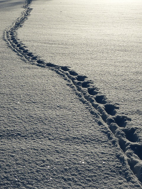 tracks in the winter snow